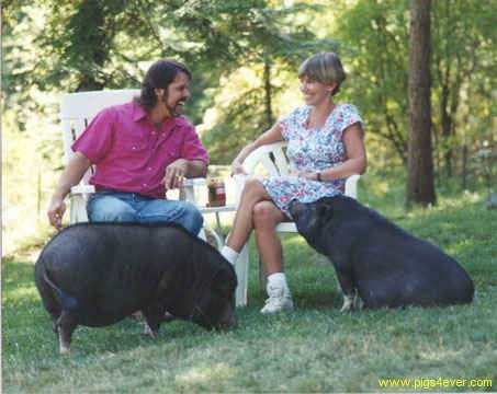 Family with Pot Belly Pigs